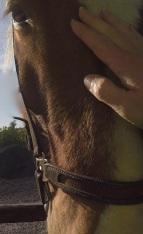 hand-horse3